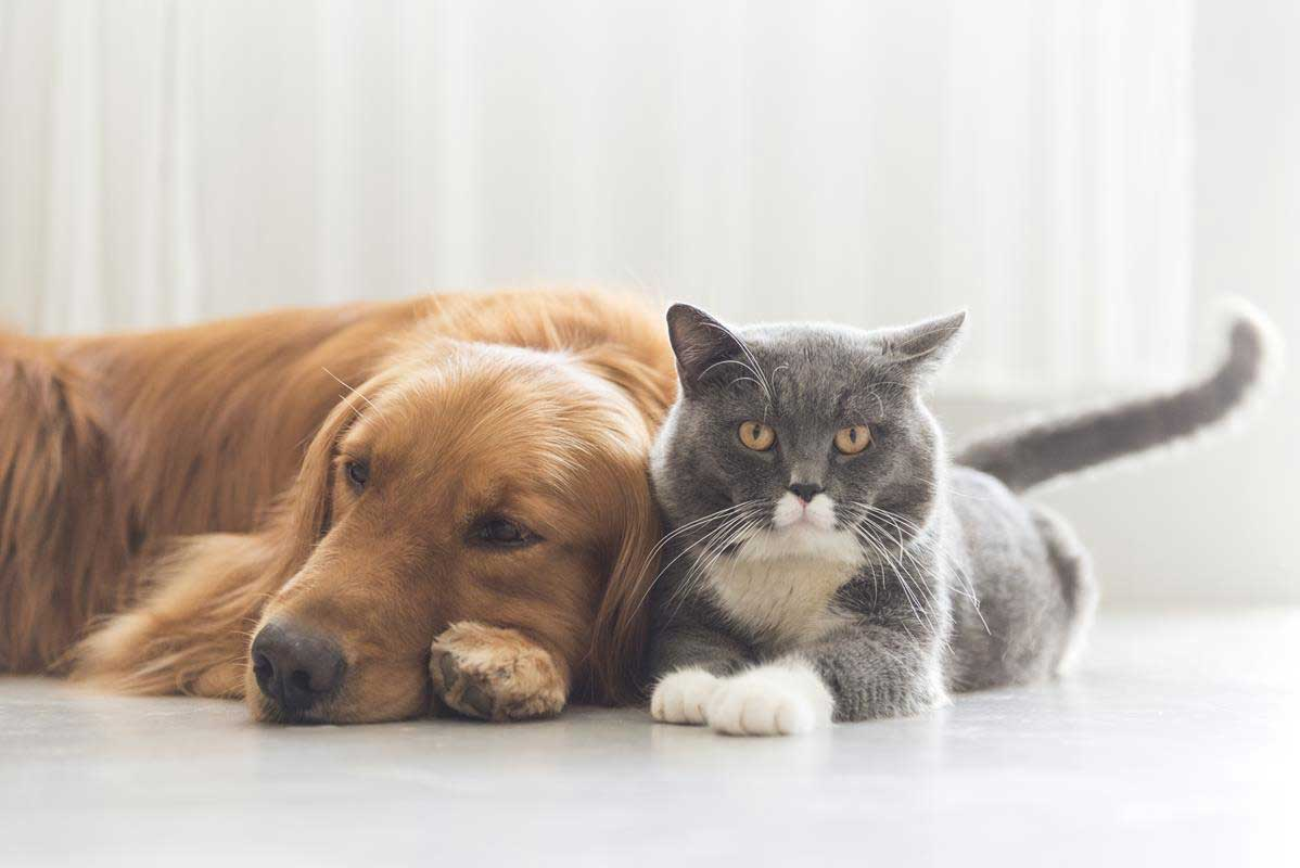 about our veterinary practice  Lakewood, CA